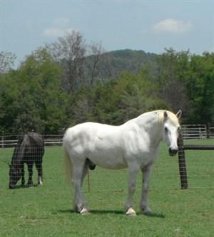 ferrell_hollow_horses_9_20120919_1055093243_thumb.jpg