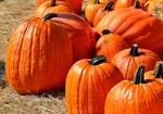pumpkins-1572864_thumb.jpg